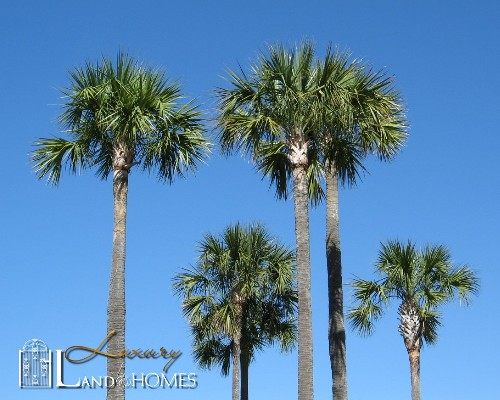 charleston sc palms