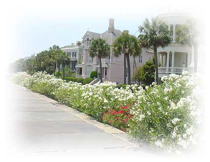 flowers in bloom on the Charleston   Battery with view of typical historic homes lined up on high Battery in the Spring.